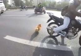 bande_motard_bloquent_autoroute_sauver_chien_perdu
