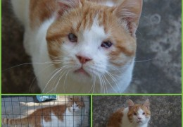 chat_adoption_bambou_8ans
