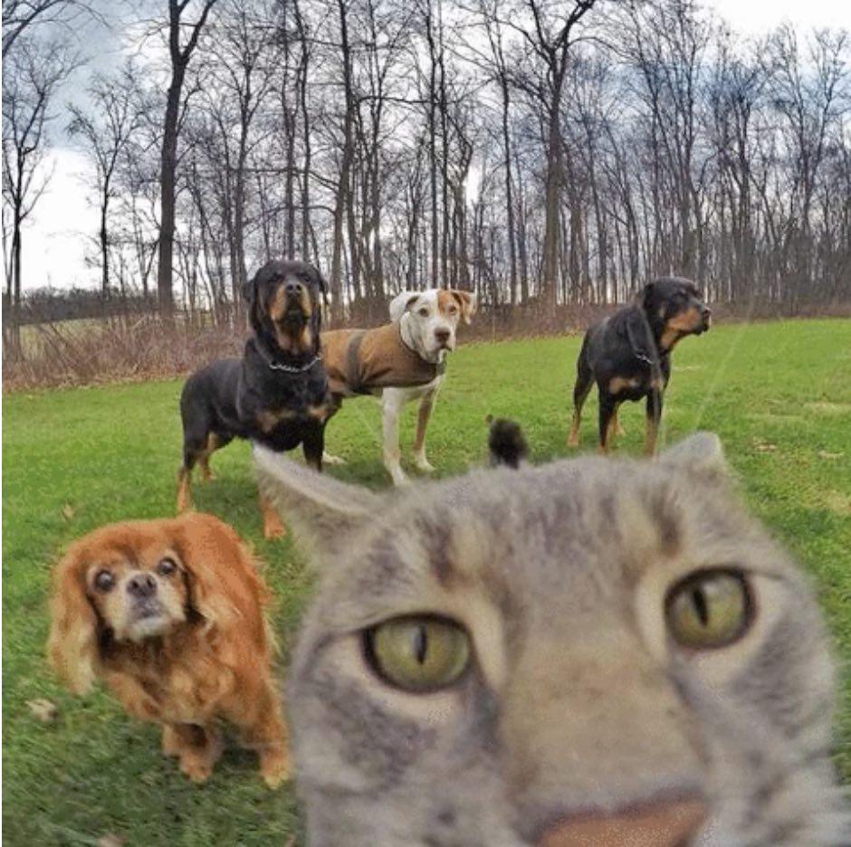 chat_gris_roi_du_selfie_3