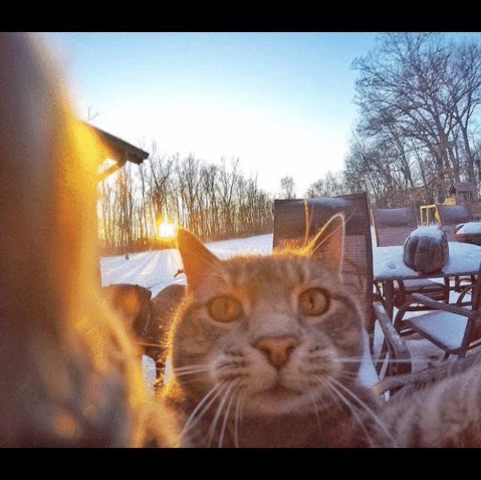 chat_gris_roi_du_selfie_4