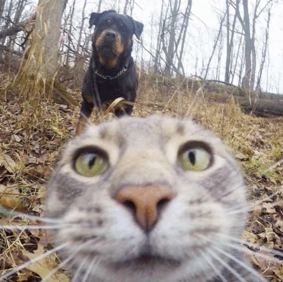 chat_gris_roi_du_selfie_5