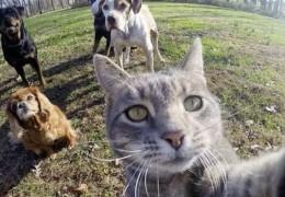 chat_gris_roi_du_selfie_6