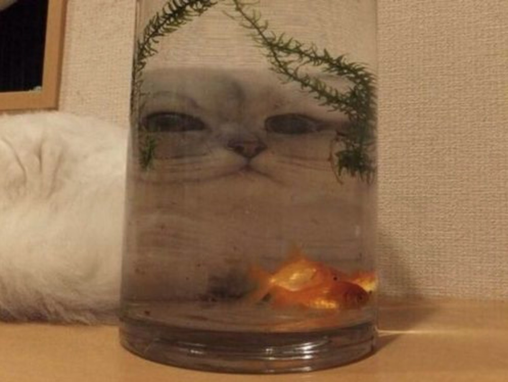 chat_moche_aquarium