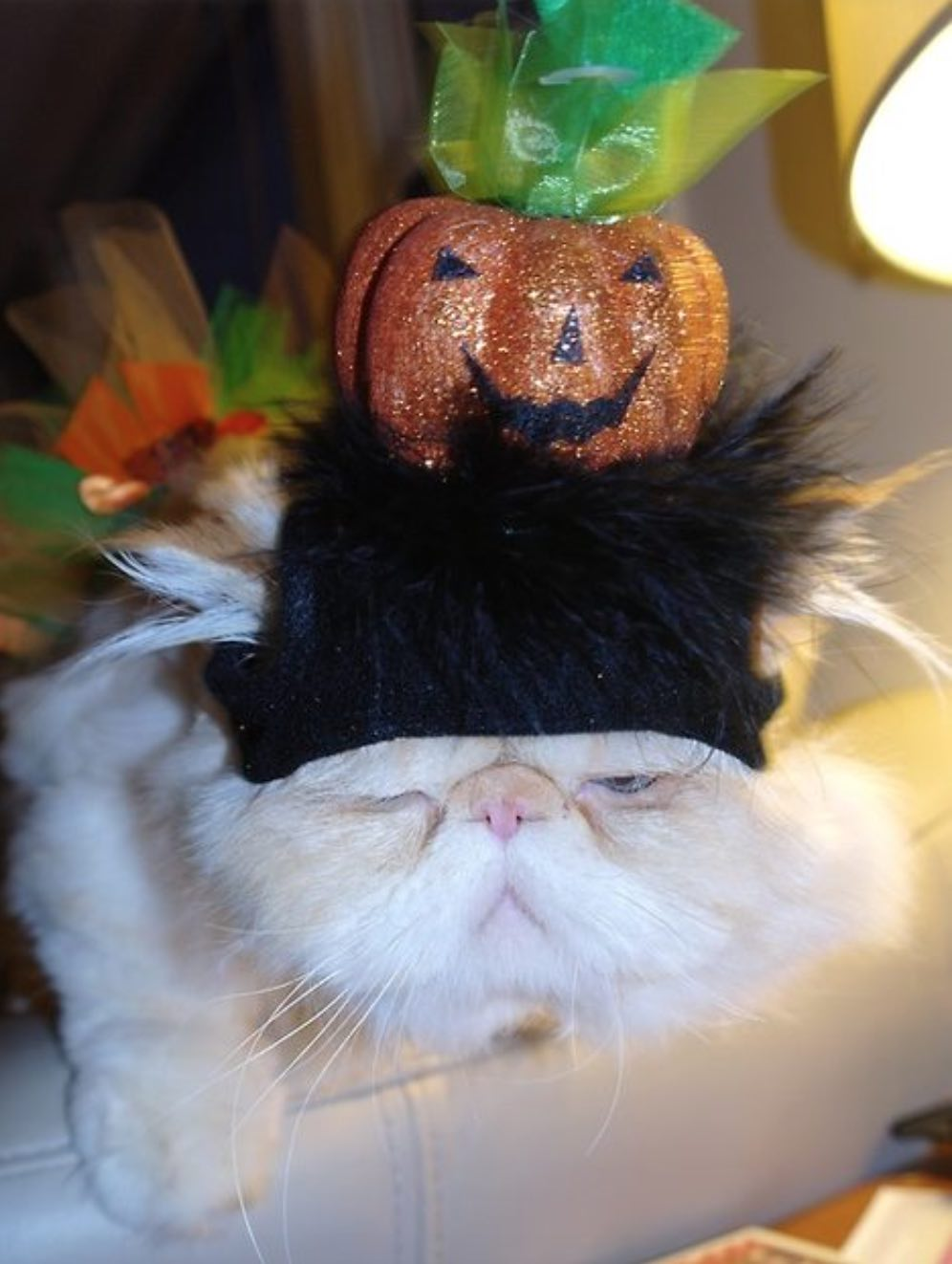 chat_moche_halloween