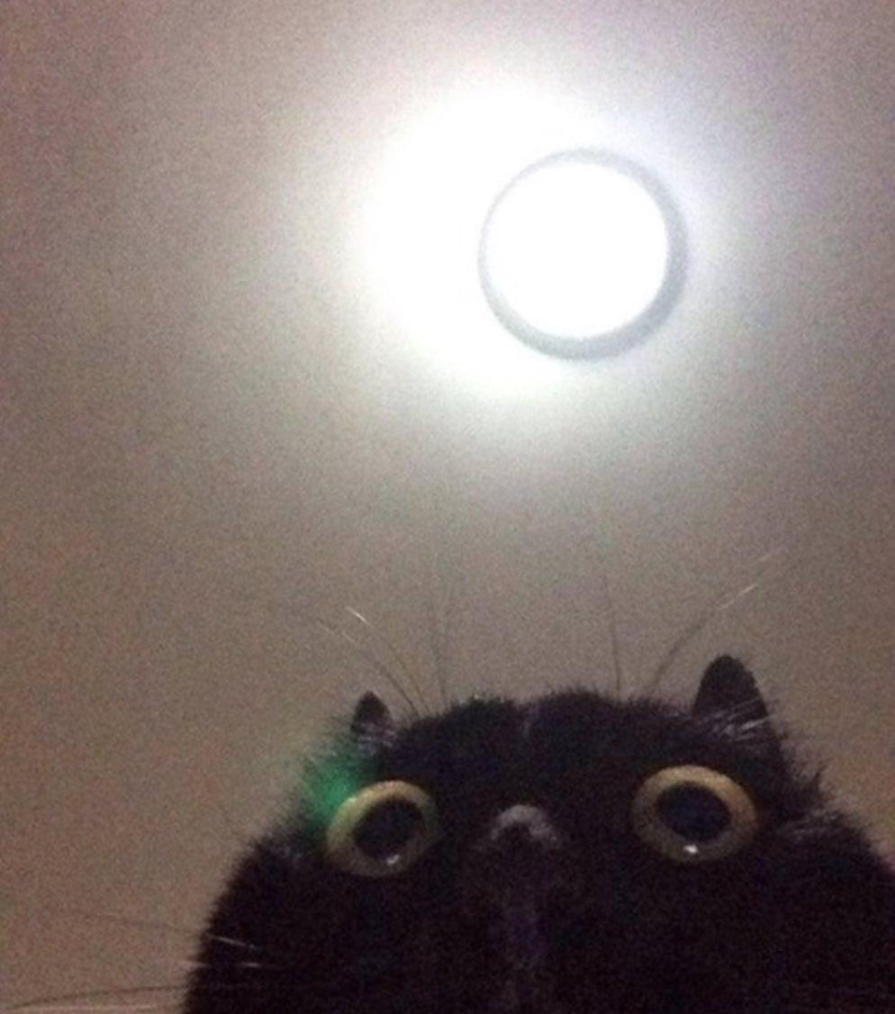 chat_moche_selfie