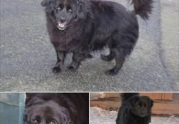chien_adoption_bella_9ans