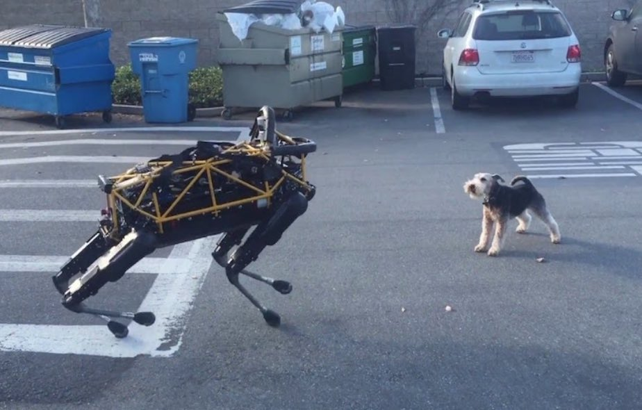 chien_decouvre_robot_chien