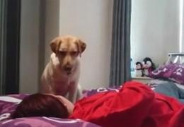 chien_poppy_labrador_previent_soigne_epilepsie