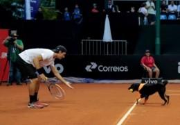 chien_ramasseur_balles_open_tennis_bresil