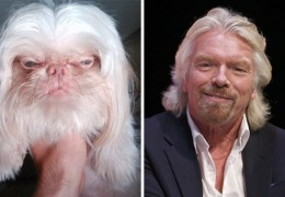chien_sosie_richard_branson_virgin