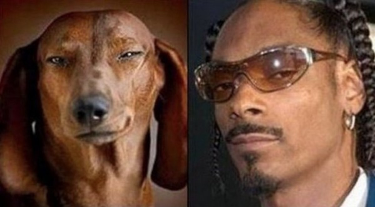 chien_sosie_snoop_doggy_dogg