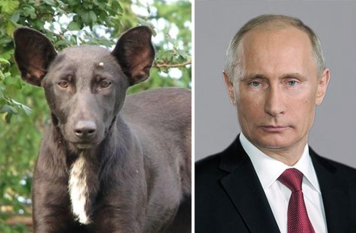 chien_sosie_vladimir_poutine