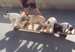 homme_promenade_skateboard_six_chiens_carlin
