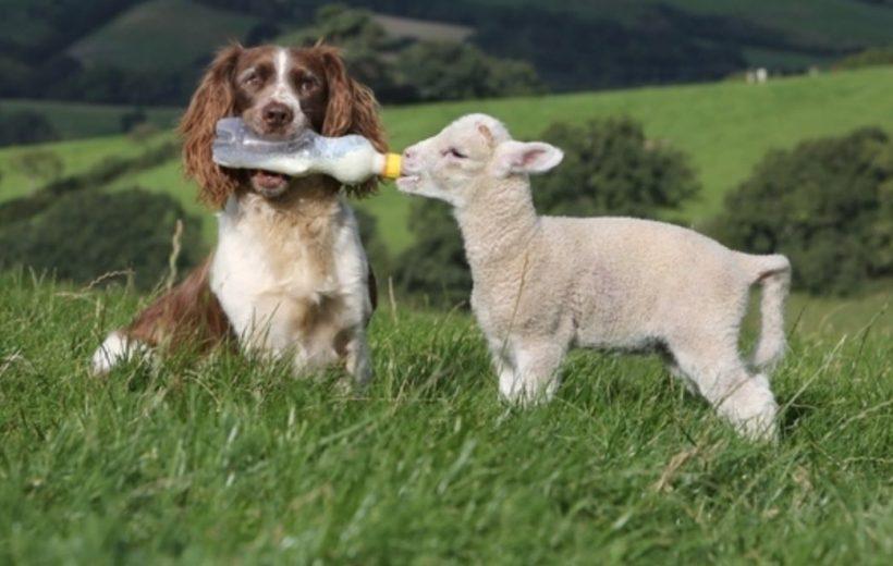 chien-video-biberon-tete-bebe-agneau